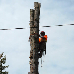 services-tree-removal