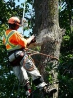 james-timberjack-tree-service-barrie-sm