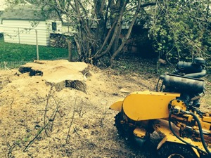 stump-grinding and removal Barrie