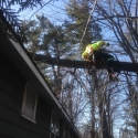 clean-up-winter-storm-damaged-trees