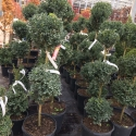 heading-weplant-nursery-stock