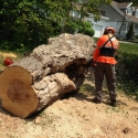 large-hazardous-tree-removal-2