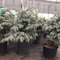 planting-2