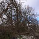 storm-damage-pruning
