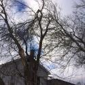 storm-damage-pruning-2