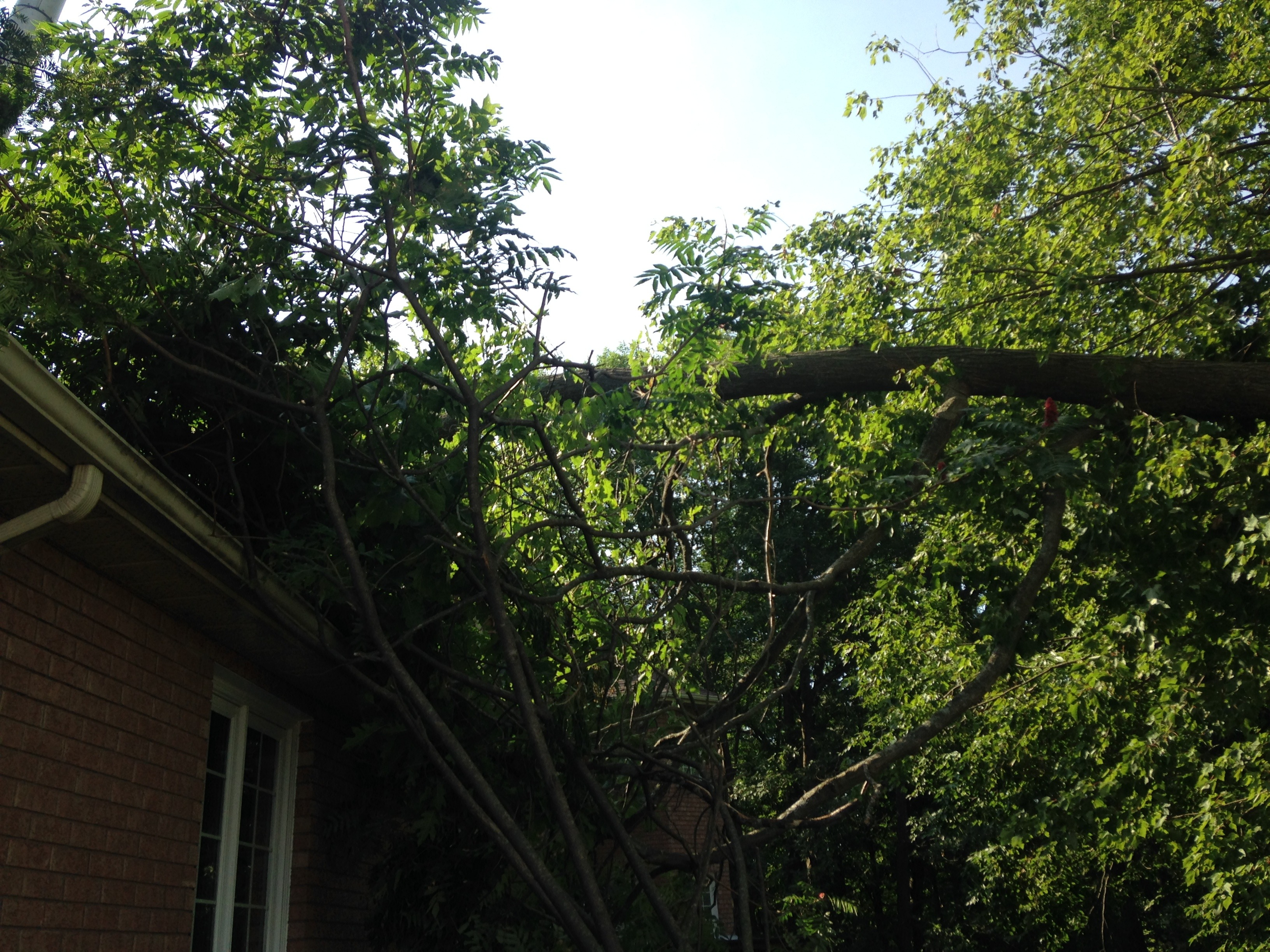 storm damage tree specialist