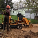 stump-grinding-professionals-2