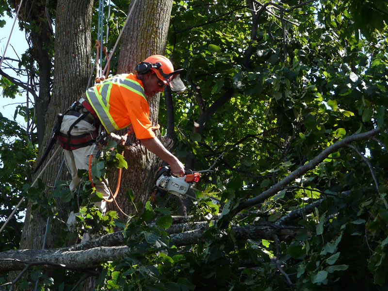 tree surgery barrie