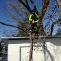 tricky-tree-removal