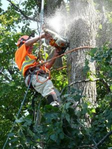tree worker safety